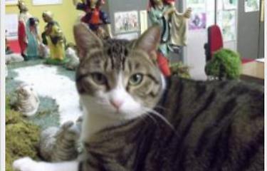 Gravellona Lomellina, il gatto sindaco celebra matrimoni in Comune – Gruppo Corriere