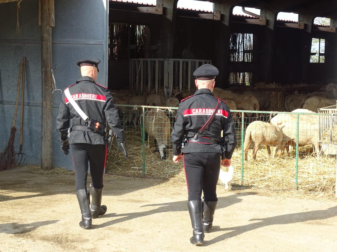 Siena, lavoro nero nell'azienda agricola: impiegati ...